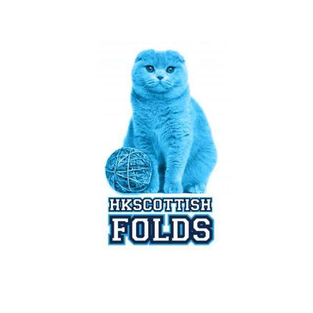 HKScottish Folds
